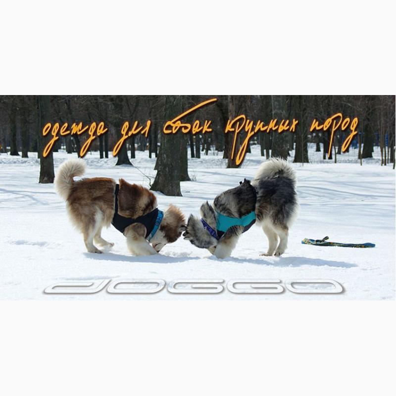 Фото 4. Одежда для собак французский бульдог и крупных пород - ТМ DOGGO