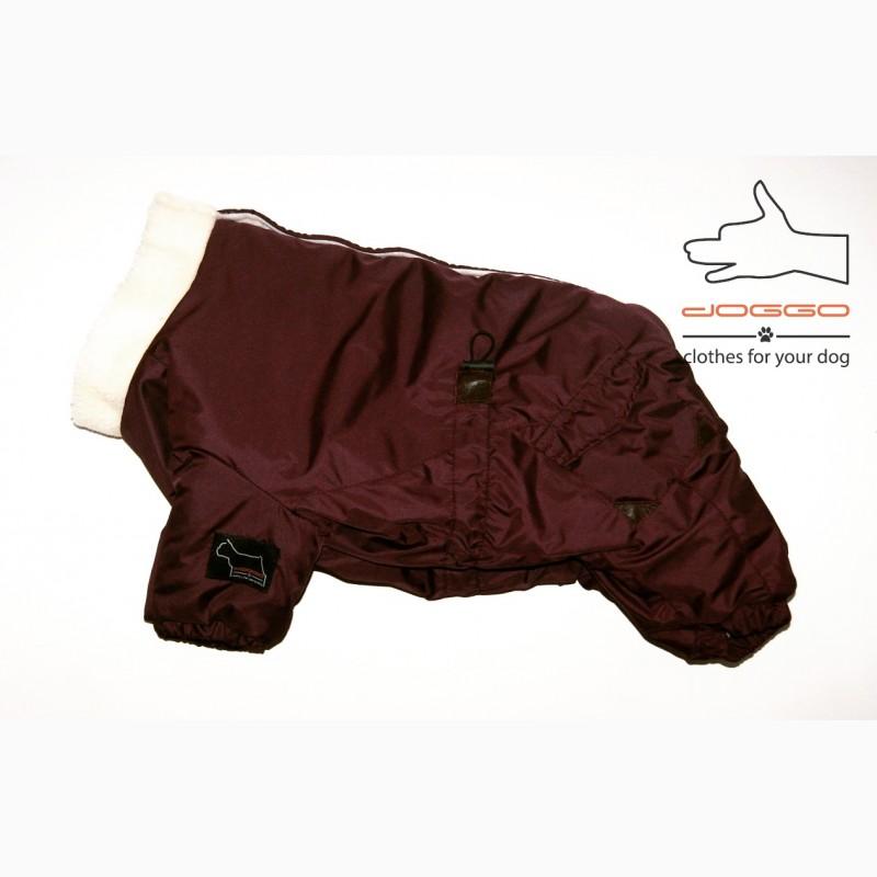 Фото 12. Одежда для собак французский бульдог и крупных пород - ТМ DOGGO