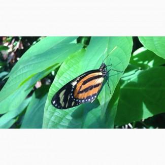Яркие Живые Бабочки изПакистана