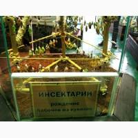 Высоко доходный бизнес ферма Живых Восхитительных Бабочек из Тайланда