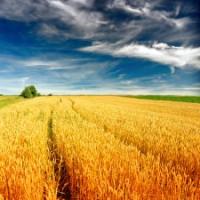 Землю сельхозназначения