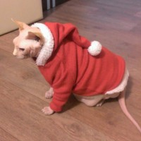 Новогодняя одежда (новогодний костюм) для собаки или сфинкса