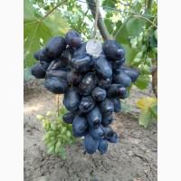 Черенки (чубуки) винограда. Новая коллекция сортов